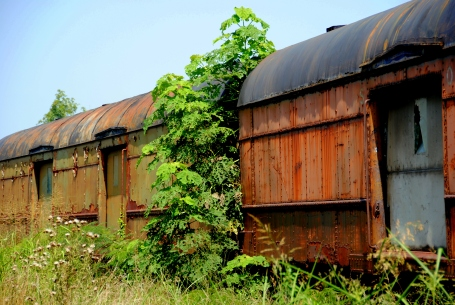 Rusted train and overgrowth