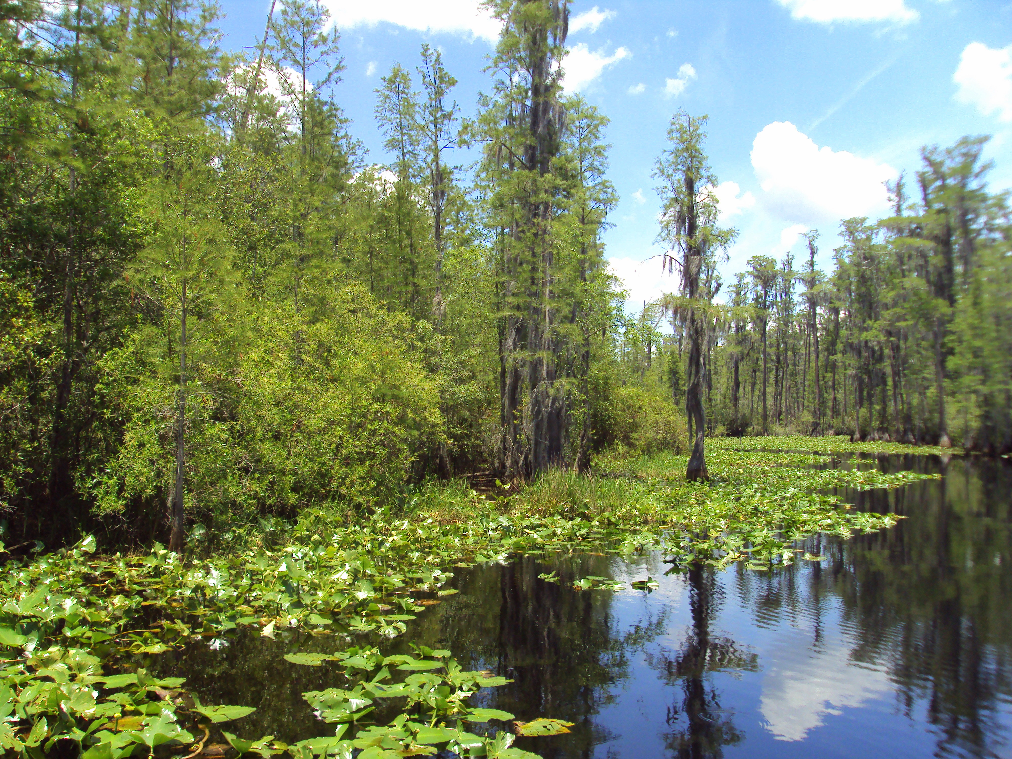 The Okefenokee Swamp Homepage