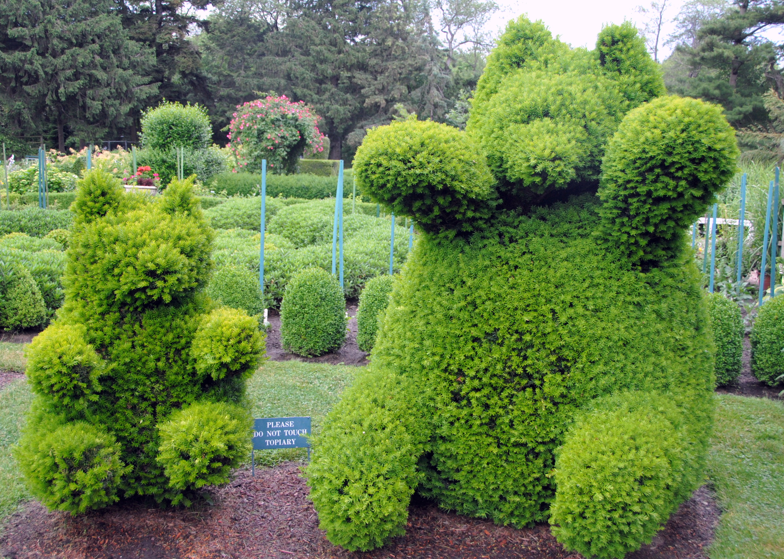 Teddy Bear Topiary