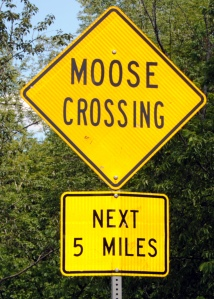 Moose Crossing sign