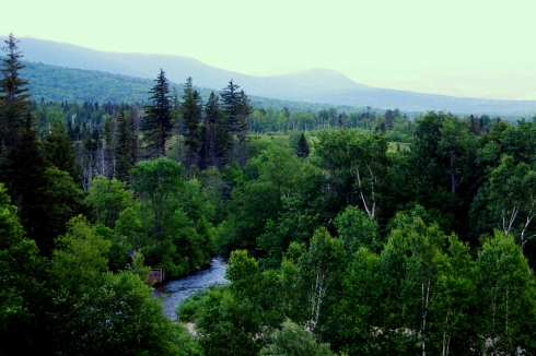 Trees in New Hampshire