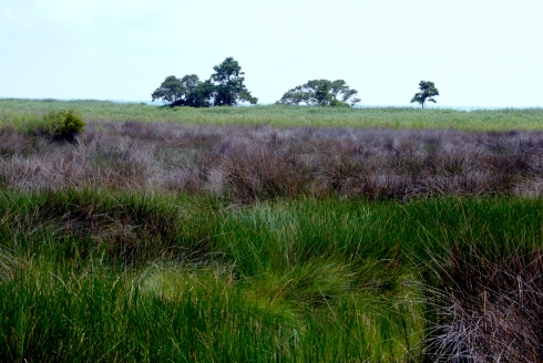 Marsh at Nags Head Preserve